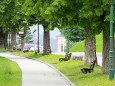 7 Punkte Weg - Tageswanderung über sanftes Almengebiet - Das Ziel, die Mariazeller Basilika ist in Sicht