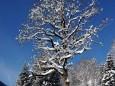 Baum in der Grünau - 13. Dezember 2012