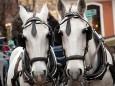Advent in Mariazell 2011 - 1. Adventwochenende - Pferdekutschenfahrten