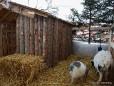 Europeum Terrasse - Dicke Ziegen und ein Hase