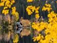 erlaufsee-spiegelungen-01112020-8774