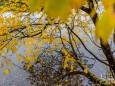 erlaufsee-spiegelungen-01112020-8778