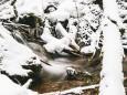 winterwanderung-mariazell-18022018-3748