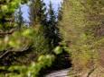 brunnsteinmauer-wandertour-mariazellerland-5434