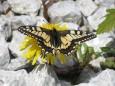 Foto: Christian Staberl - Blogbericht - Hobbyfotografen aus dem Mariazellerland