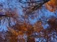 Am Weg zum Dürrenstein - Herbstwald
