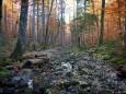 Am Weg zum Dürrenstein