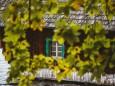 erlaufsee-fotostrecke-herbstfarben-18102020-7874