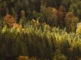 erlaufsee-fotostrecke-herbstfarben-18102020-7901