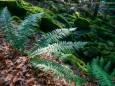 Wanderung Erlaufursprung - Brunnstein - Brach - Gemeindealpe - Erlaufsee