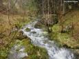 Nach ein paar hundert Metern ist sie schon ein hinabstürzender Fluß. Mit Fantasie hingeschaut, wird ein Tiergesicht erkennbar! Vom Erlaufursprung zum Erlaufsee. Foto: Gerhard Wagner
