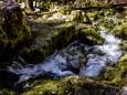 Blick von der Ursprungshöhle hinunter zum Bachlauf_ erlaufursprung-23042021-2995