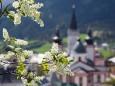 Basilikablick mit Blütenschmuck