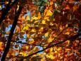 Herbstwanderung Köckensattel-Fahrnboden-Ochsenboden