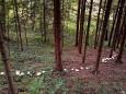 Hexenkreis - Fastenwanderungen mit Dr. Surböck bei der Saftfastenwoche im Herbst 2012 - Mariazellerland