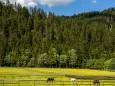 blumenwiese-pferde-gruenau-6209