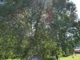 fronleichnamsprozession-gusswerk_p1120121