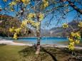 fruehling-im-mariazellerland-230402020-29230