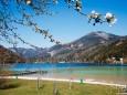 fruehling-im-mariazellerland-230402020-29250