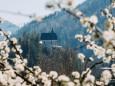 Schlehenblüte-mariazell-22042020-29170