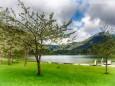 Frühlingsblüte am Erlaufsee
