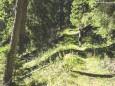 Gr. Geiger (1723 m) Rundwanderung von Hinterwildalpen