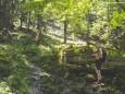 Im Bereich der alten Hütte der Pumperlhochalm - Gr. Geiger (1723 m) Rundwanderung von Hinterwildalpen
