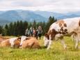 Gipfelklänge 2017:Mit der Kuh auf du und du © Mostviertel Tourismus/Fred Lindmoser