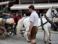 Maibaum wird mit Pferden gebracht