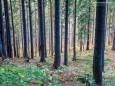 Rundwanderung Schöneben-Proles-Königskogel-Dürriegelalm-Schöneben