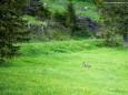 Es ist ein Reh entsprungen...Heilige und Heilende Wege nach Mariazell - Kräutergärten am Sebastianiweg