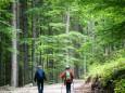 Aufsteig zum Waldhüttsattel