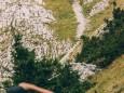 Eine Gämse hat sich auch am Teufelsteig blicken lassen | Hohe Veitsch - Rundtour