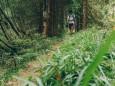 Abstieg in den Rotsohlgraben | Hohe Veitsch - Rundtour