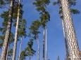 Bäume am Weg Richtung Gemeindealpe - Start Erlaufsee - 16.1.2011