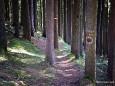 Wald am Weg Richtung Gemeindealpe - Start Erlaufsee - 16.1.2011