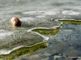 Dünnes Eis am Erlaufsee - 16.1.2011