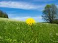 Kaiserthron - Hinunter nach Wienerbruck über eine schöne Blumenwiese