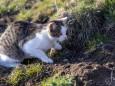 Maus flüchtet vor der Katze - Katz und Mausspiel auf der Stehralm