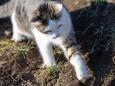 Katze streichelt Maus - Katz und Mausspiel auf der Stehralm