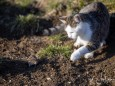 Klein Maus und große Katze - Katz und Mausspiel auf der Stehralm