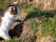 Komm spiel mit mir - Katz und Mausspiel auf der Stehralm