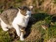 Maus erschreckt die Katze - Katz und Mausspiel auf der Stehralm
