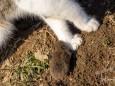 Maus beißt Katze in die Pfoten - Katz und Mausspiel auf der Stehralm