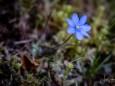 klausgraben-salzatal-mariazellerland-01052021-3508