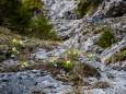 klausgraben-salzatal-mariazellerland-01052021-3531