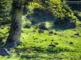 FALBERSBACHALM - Wanderung - Großer Königskogel (1574m) über Schöneben und Dürriegel