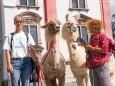 Lama Wanderung von Aflenz nach Mariazell
