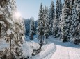 winterlandschaft-mariazellerland-11122020-0117