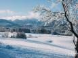 winterlandschaft-mariazellerland-11122020-0143